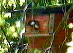 bird leaves nest box